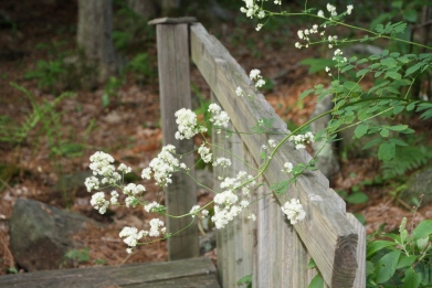 BLOG white flowers on bridge